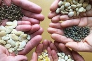 Starting A Seed Garden