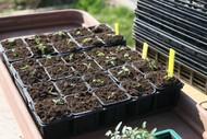 Raising Your Own Seedlings