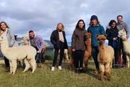 Alpaca Farm Walk