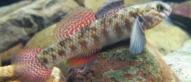 Te Manawa Aquarium Opening