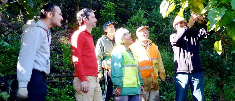 Maungawhau-Mt Eden Guided Walk