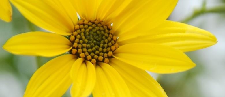 Nurturing Positivity Through Yoga - Easter Weekend Retreat