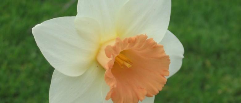 Late Daffodil Show
