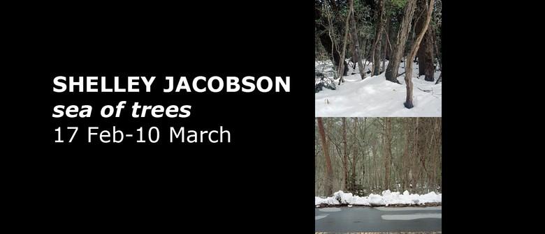 Shelley Jacobson: Sea of Trees