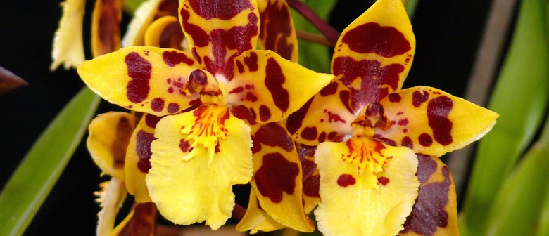 Orchid and Floral Art Show