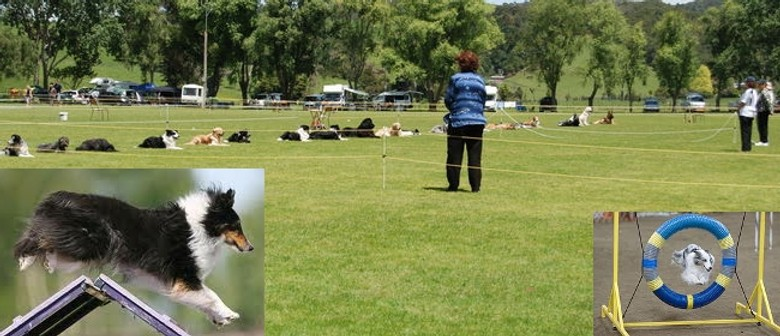 Whangarei Dog Training Obedience & Agility Ribbon Trials