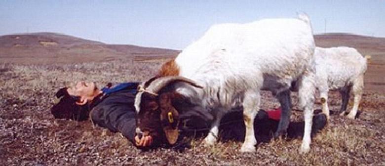 Two Great Sheep - Wellington Film Society