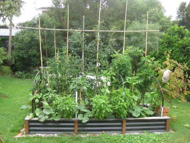 Small Space Big Harvest Edible Garden Design Hamilton Eventfinda