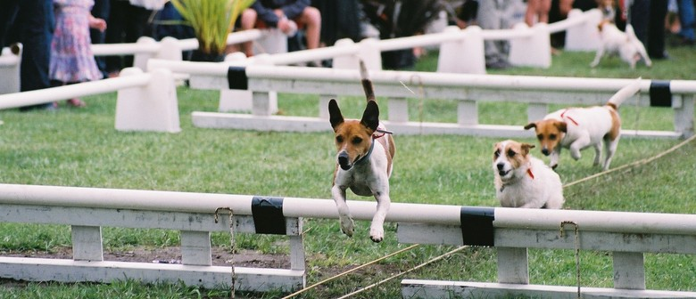 Terrier Racing Day 2012
