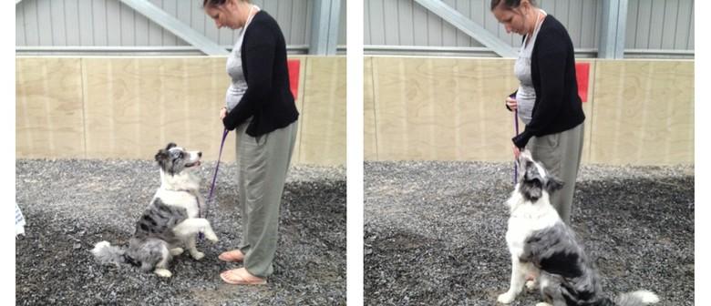 Dog Training Classes With a Dog Behaviourist