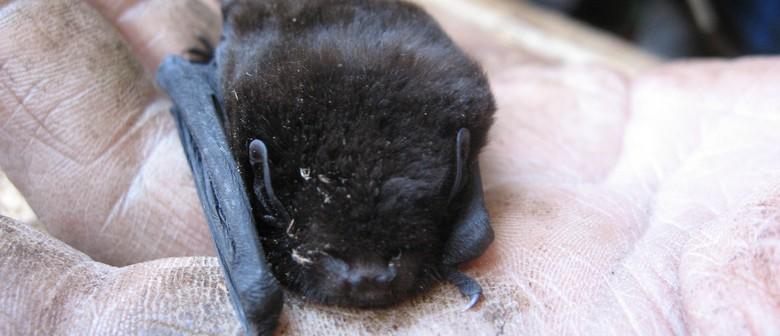 Bat Tours