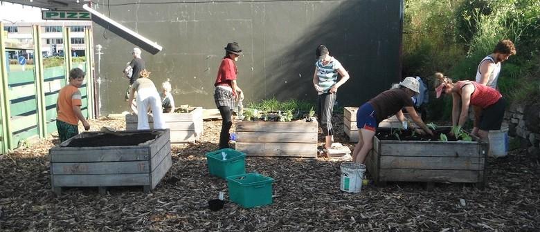 Community Garden Working Bee