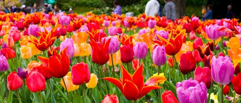 Wellington Botanic Garden Spring Festival