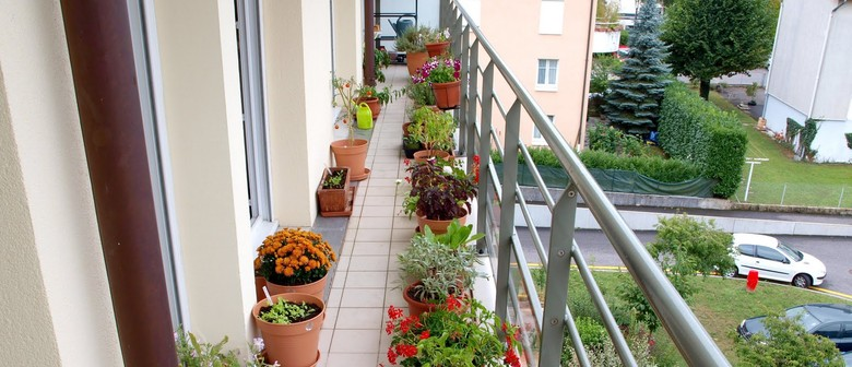 Productive Boxes, Balconies and Backyards
