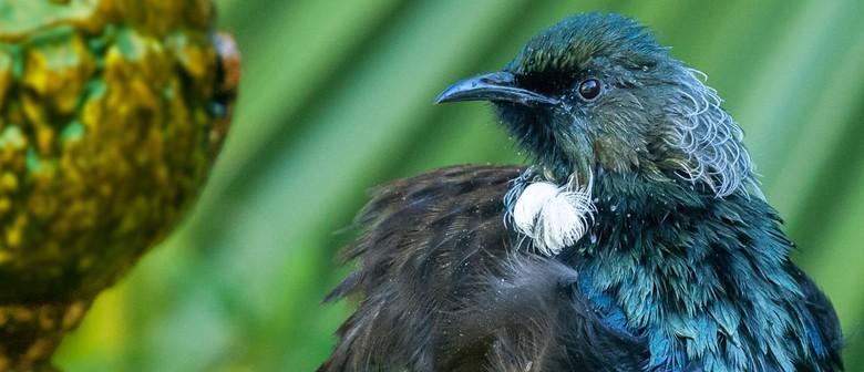 Robert Peper - Bird Photography Exhibition