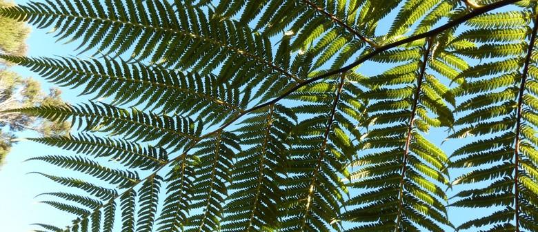 First Light Flower Essences of New Zealand - Ferns