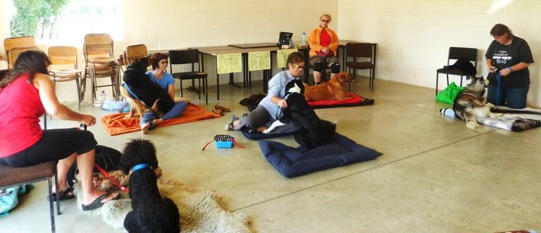 Learn - Dog Health & Wellness Massage