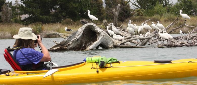 Meet the Royal Spoonbill Kayak Tour