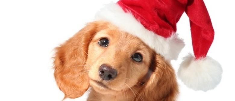 The Dog Garden - Santa Paws Christmas Dog Walk