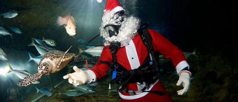 Scuba Santa Swims Into Kelly Tarlton's