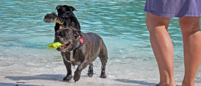 Dogs 'n' Togs - Parks Week