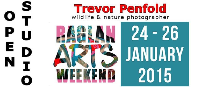 Trevor Penfold - Open Studio in Raglan Arts Weekend
