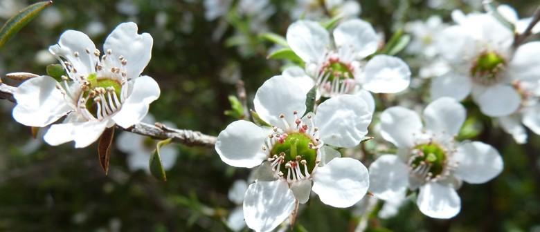 First Light Flower Essences of New Zealand: Flowers