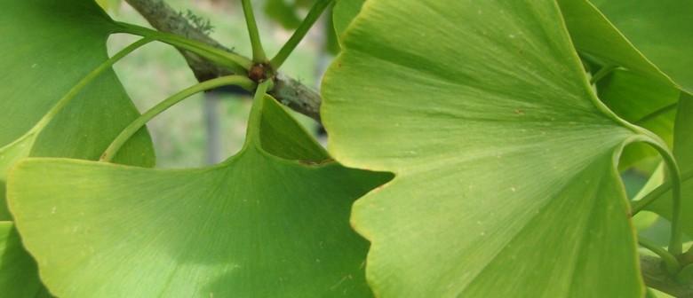 Botanic Garden Guided Walk - Ancient Trees