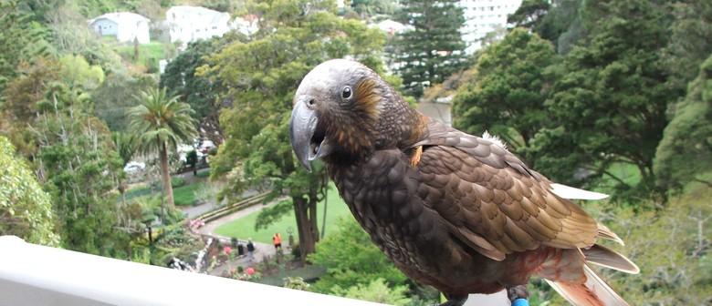 Meet the Curator - A Garden Full of Birds