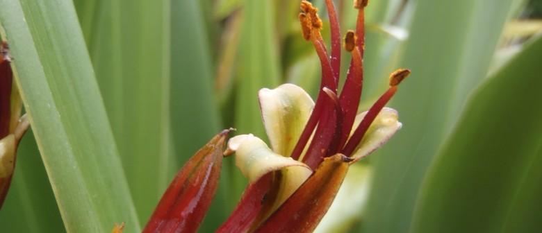 Botanic Garden Guided Walk: He Kai, He Ahi, He Weu, He Rongo