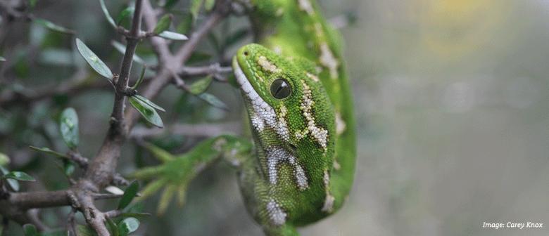 2015 Otago Wildlife Photography Exhibition