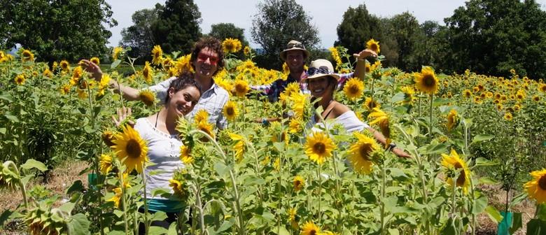 Woodlands Sunflower Camping