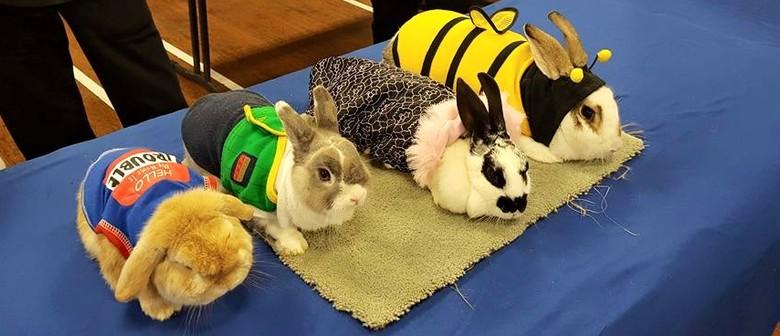 Waikato Rabbit Club:Rabbit Show