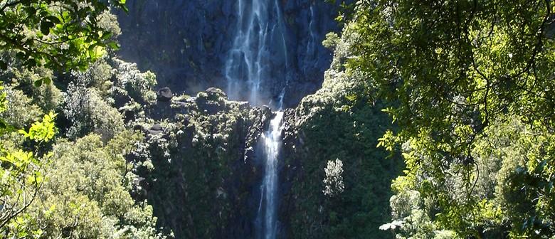 Echo Walk Fest - Wairere Falls to Te Tuhi