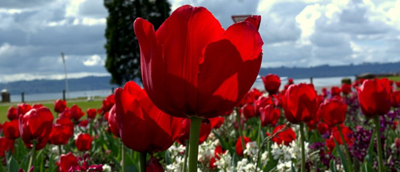 Guided Tulip Walk