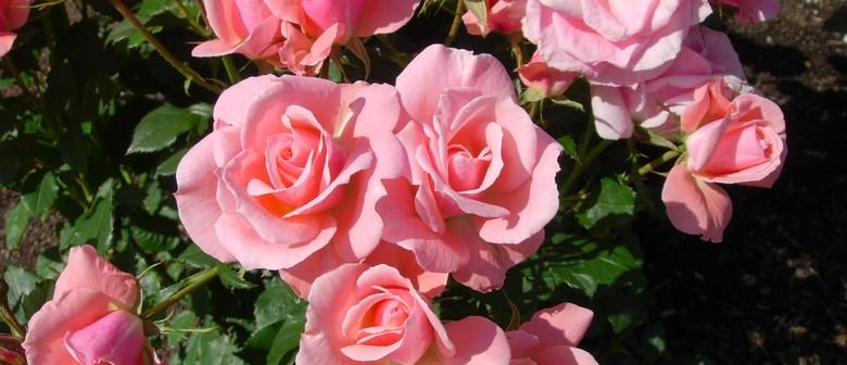 Horowhenua Rose Society Spring Rose Show