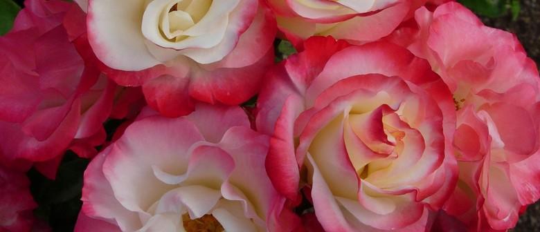 Wairarapa Rose Society Spring Rose Show