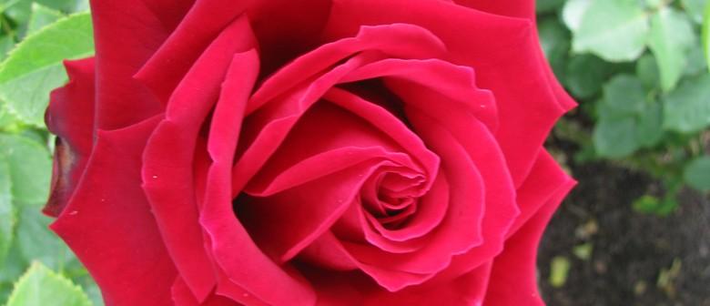 Canterbury Rose Society Spring Rose Show