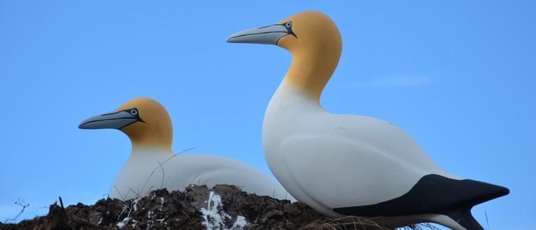 RotoroaIsland: Seabirds and Shorebirds on Rotoroa