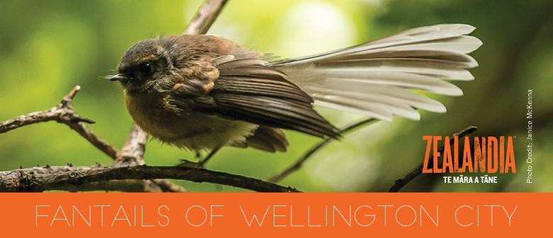 Fantails of Wellington City