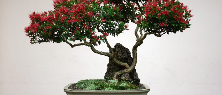 Auckland Bonsai Society Monthly Meeting