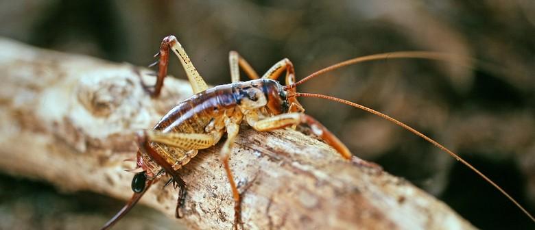 RotoroaIsland's Invertebrates