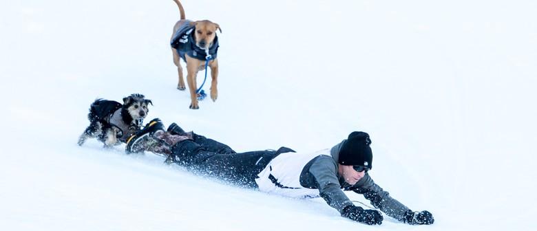 DB Export Dog Derby