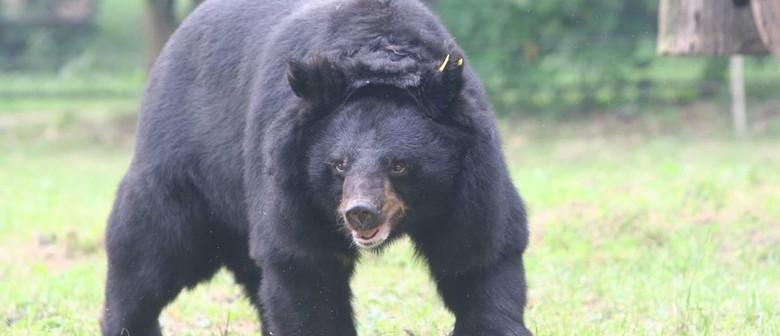 Saving Moon Bears