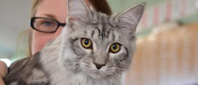 Longhair Cat Breeders Cat Show
