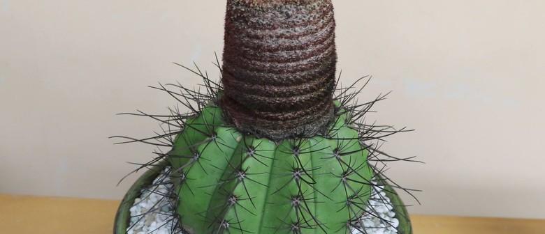 Cactus & Succulent Show and Sale