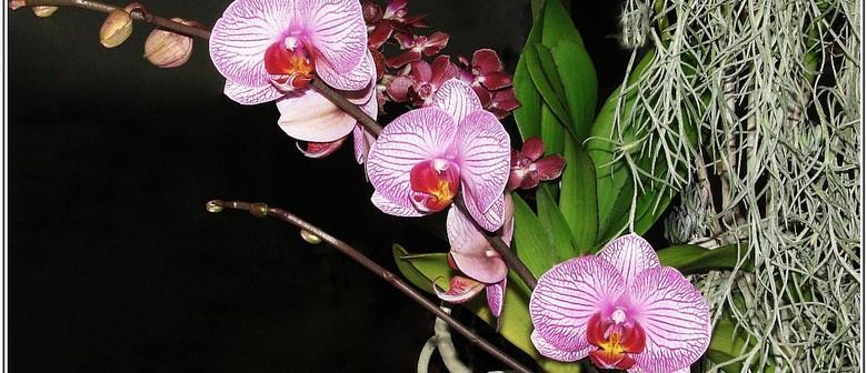Manawatu Orchid Society - Winter Show