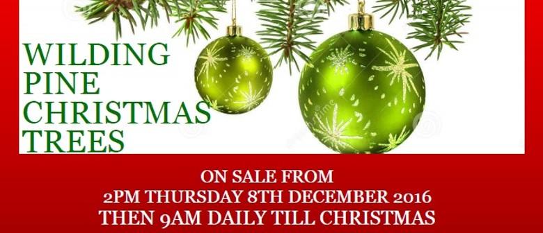 Moana House Annual Christmas Tree Fundraiser