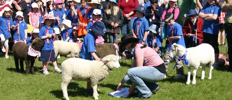 Pauatahanui Lamb & Calf Day