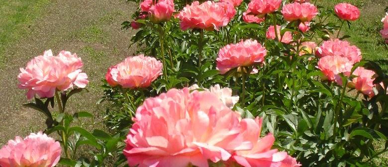 Tikokino Gardens Open Garden Weekend